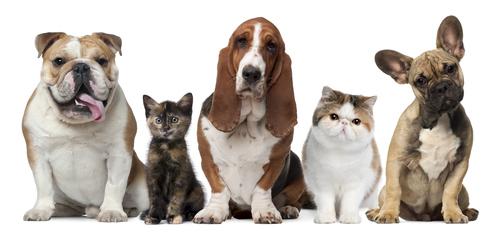 Seguro animais domésticos, é na Segatlantico; O seu Agente de SegurosSeguro que o protege dos Acidentes Pessoais, é na Segatlantico; O seu Agente de Seguros